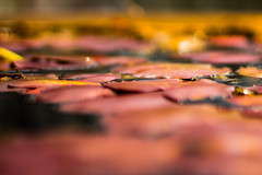 Fallen Leaves (sai_ben89) Tags: red color love nature water leaves canon blurry ben 18 wagner saiben89