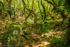 Lost in the woods! Waterfalls, Old Kavala, Greece (Jimmy Goutridis) Tags: waterfall water nature forest ponds path trail trees natural environment nikon photography walk stroll summer greece greek macedonia makedonia kavala landscape