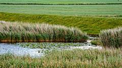 Rhapsodie in Grn (MH *) Tags: gras grass feld wasser green water meadow d7200 nordfriesland schleswigholstein fahretoft grasland vanagram sigma50200mm456dcoshsm