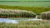 Rhapsodie in Grün (MH *) Tags: gras grass feld wasser green water meadow d7200 nordfriesland schleswigholstein fahretoft grasland vanagram sigma50200mm456dcoshsm