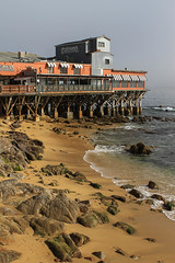 IMG_6361 (Gunter Heimlich) Tags: ocean california flowers beach nature beautiful beauty marina monterey sand rocks 101 highway1 beaches seals pacificgrove highway101 saltwater loverspoint ca1