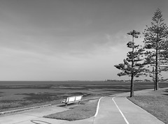 Wide Open Spaces (ang_lixing) Tags: camera bw white black tree beach bench point open phone 5 wide australia brisbane lg wellington queensland nexus spaces phonetography