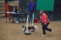 agility235 (jaimekay16) Tags: dog training austin agility k9 xpress nadac k9x