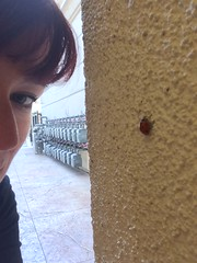 Day 95 (boxbabe86) Tags: wall work march noho ladybug day95 northhollywood 2015 365days