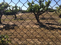 Road View (adventurekyles) Tags: trees urban gardens fruit private underground ruins farm farming property orchard adventure fresno mysterious restoration tunnels exploration incredible grafted kyles grafting fruittrees hiddengem forestiere adventurekyles undergroundwonder