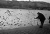 Old Friends (william Philip Kirk) Tags: blackandwhite seagulls river prague oldman feedingthebirds elmar vltava leicaiiib