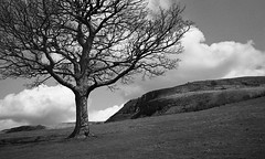 Tree (4foot2) Tags: leica blackandwhite bw tree film monochrome 35mm landscape rocks view kodak tmax hill hc110 rangefinder summicron 35mmfilm oldham analogue m3 peakdistrictnationalpark 400iso kodaktmax filmphotography 2015 greatermanchester printfilm leicam3 dovestonereservoir greatdovestonerocks 4foot2 4foot2flickr 4foot2photostream fourfoottwo