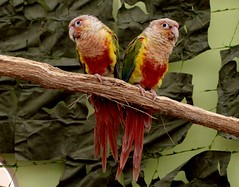 Birds (heiko.moser) Tags: color bird nature animal canon tiere natur natura 100mm vgel animale nahaufnahme tier vogel heikomoser