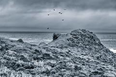 Dark Coast (CarbonNYC [in SF!]) Tags: ocean water birds landscape vultures carmel pointlobos
