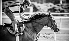 Simon Riding (EASY GOER) Tags: park horses horse sports belmont racing races thoroughbred equine