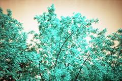 film (La fille renne) Tags: trees sky film nature analog 35mm lomography turquoise lomolca lomochrome lafillerenne lomochrometurquoise lomochrometurquoisexr100400