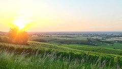 Tramonto in Val Versa (darioauroraelisa) Tags: verde italia tramonto giallo cielo sole uva lombardia pv colline pavia viti bellaria zenevredo valversa