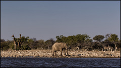 _SG_2016_05_Namibia_0091_IMG_1536 (_SG_) Tags: auto africa park trip elephant tree water car nationalpark wasser solitude desert hole national afrika giraffe ausflug elefant namibia herd baum strauch etosha watering wateringhole elefanten 2016 einde giraffen etoshanationalpark standpost wasserstelle etoshapark elefantenherde giraffenherde giraffesherd