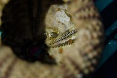 Small Crab Inside Sea Urchin (alexspengler) Tags: nature animals outdoors crab urchin