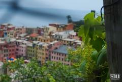 Vernazza, Cinque Terre, Italy (hexaphobic) Tags: vacation italy house heritage nikon village unesco vineyards grapes colored coastline cinqueterre nikkor d60 nikond60