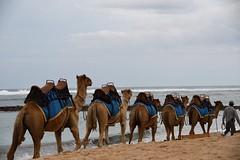 Nusa Dua, Indonesia (Nam__b) Tags: bali beach nature indonesia outdoor camel