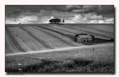 Cold Harbour Barn (jeremy willcocks) Tags: uk blackandwhite tree barn landscape mono corn tracks devon southhams coldharbour jeremywillcocks fujixt1 xf50140 wwwsouthwestscenesmeuk