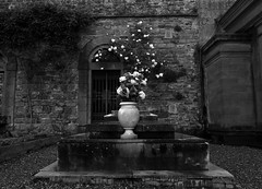 Rose Tombstone (Captivating Concepts) Tags: rose florence flowers blackandwhite fringe grit weary mysterious bw grave tomb travel youth death art dark structure