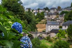 Vue d'hortensia (kromatographe) Tags: paysage village traignac hortensia ardoise