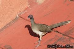 Birds of Huatulco, Mexico (WarpFactorEnterprises) Tags: winter bird mexico tour watching guide huatulco 201415