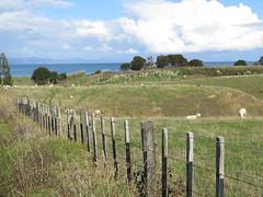 """Pas mal la vue des moutons <a style=""""margin-left:10px; font-size:0.8em;"""" href=""""http://www.flickr.com/photos/83080376@N03/16401046064/"""" target=""""_blank"""">@flickr</a>"""