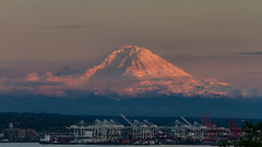 The mountain is out. (Brendinni) Tags: seattle trees sunset sky foothills snow water clouds cranes mountrainier rainier magnolia portofseattle seattlewa ellabaileypark