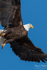 Bald Eagle launch sequence - 3 of 8