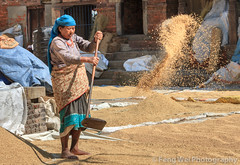 Working Newar Woman, Bhaktapur, Nepal (Feng Wei Photography) Tags: travel nepal woman color horizontal asia outdoor working unesco nepalese np tradition bhaktapur argiculture bagmati newar centralregion bhadgaon