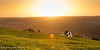 Nibbler and sunrise on Streatley Hill (Mr Whites Paw Prints) Tags: dog rural sunrise landscape jackrussell nibbler streatleyhill