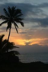 Florida Keys 1529282 (thw05) Tags: trees sea people usa tourism nature water keys florida shoreline places historic tropical february tropics 2015 traveldestinations famousplace thwphotoscom thwilliamsphotography thomashwilliams