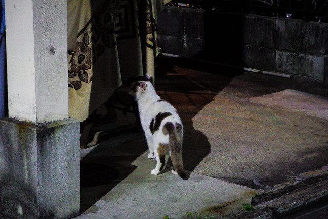 Today's Cat@2015-04-23