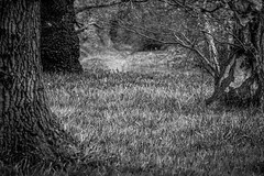 A mono woodland (Neil Nicklin Photography) Tags: white black tree grass bluebells contrast canon photography mono market wildlife yorkshire north neil east trust cave bluebell uwa 2015 yorkshirewildlifetrust weighton 70d nicklin ywt