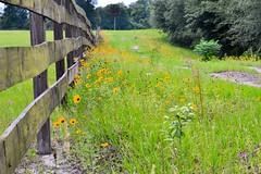 wildflowers (donjuanmon) Tags: wood brown green field grass yellow fencing wildflowers hff fencedfridays donjuanmon
