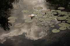 (Frida J) Tags: summer cloud reflection water garden pond waterlily lilypond