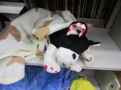 063 (myjcpl) Tags: stuffedanimals sleepover