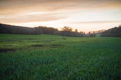 (Rob Hurson) Tags: ireland sunset rural evening spring pentax meath slane tamron2875mmf28 riverboyne pentaxk30 boynenavigation