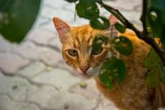 IMGP2532-2 (UmitCukurel) Tags: nightphotography sea night cat turkey puente mar pentax turkiye istanbul gato turquia bogazici bosphorus kedi kizkulesi maidentower k3ii