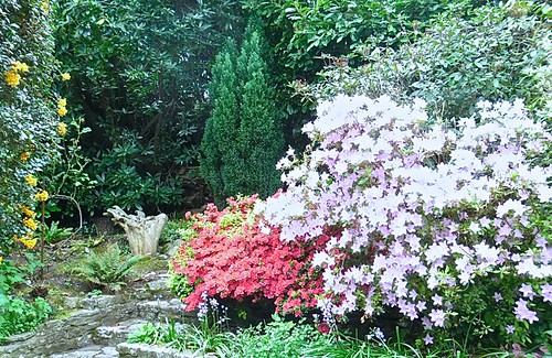 Back garden of azaleas with driftwood by Andre Thomas