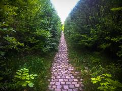 Forest path (Hasan Yuzeir) Tags: light summer sky tree green grass forest leaf spring phone path samsung plate galaxy hasanyuzeir