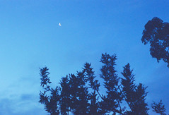 Pentax k1000 (fiumartinelli) Tags: trees sky moon film nature analog 35mm dead photography is fuji pentax k1000 superia luna fujifilm mm fotografia 35 800 analogica xtra fujicolor