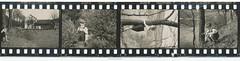 35mm Contact Print Roll In der Heimat 2 (02) (Hans Kerensky) Tags: film nature 35mm paper print found deutschland with walk 1938 holes photographs german f roll contact agfa 1939 heimat sprocket isopan