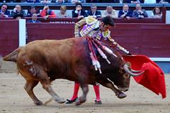 Talavante, Las Ventas, Madrid (Fotomondeo) Tags: madrid espaa spain bull bullfighter bullfight toro bullring matador torero sanisidro plazadetoros corridadetoros lasventas alejandrotalavante