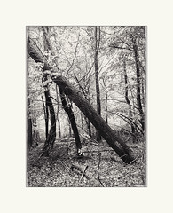 Holding up (Paul Evans.) Tags: wood trees mist tree forest paul evans woods cops