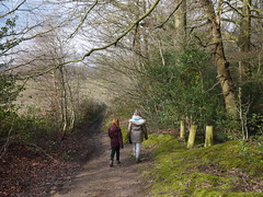 Into the Woods (Worthing Wanderer) Tags: winter cloudy walk surrey february dorking westcott greensand