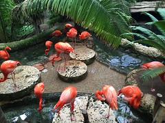 "Flamingos at the Dallas Aquarium • <a style=""font-size:0.8em;"" href=""http://www.flickr.com/photos/109120354@N07/27244269364/"" target=""_blank"">View on Flickr</a>"