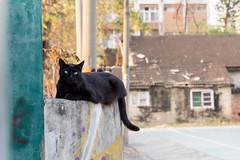P4085797 (daisuke1230) Tags: cat olympus neko em  m43