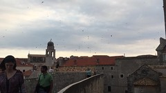 Swooping seabirds, Dubrovnik, Croatia (Le monde aux yeux d'une Canadienne) Tags: dubrovnik croatia europe adriatic travel 2016 june juin summer t