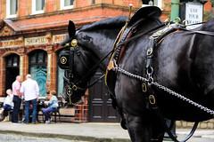 Joseph_ (AnnMelanie) Tags: summer horse colour sunshine museum vintage outdoors derbyshire transport shire trams preservation crich horsetram nationaltramwaymuseum