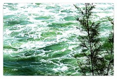 Espumante (o.dirce) Tags: planta nature mar natureza espuma odirce