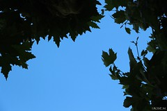 I.ROSE.M. #Negative space ...go go Godzilla (idarosemarcantonioakai.rose.m.) Tags: blue trees sky nature godzilla negativespace